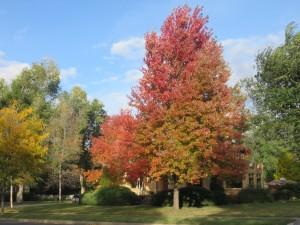Spectacular autumn in Northern Colorado!