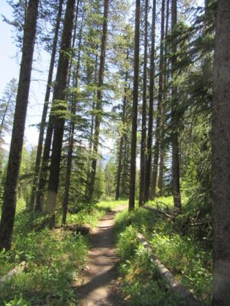 Along the trails at Canmore Nordic Center